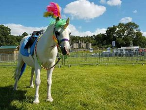 Unicorn from Clip Clop Pony Rides